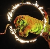 Цирки в Дарьинском