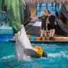 Дельфинарии, океанариумы в Дарьинском