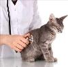 Ветеринарные клиники в Дарьинском
